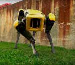 В Boston Dynamics создан робот-собака SpotMini | видео