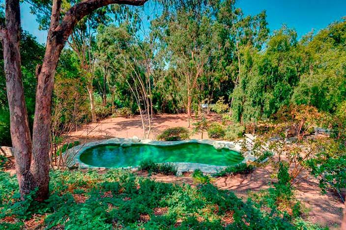 Бассейн в тени деревьев у дома Мерил Стрип в Пасадене