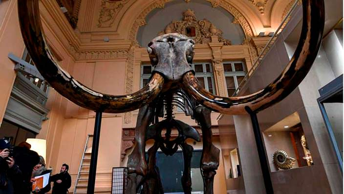 Скелет мамонта с Сибири. Стоит €548 250