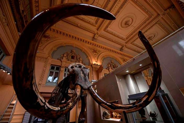 Скелет мамонта можно было купить на аукционе во Франции