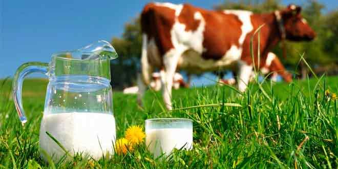 Качественное оборудование для коровьей фермы от VAB