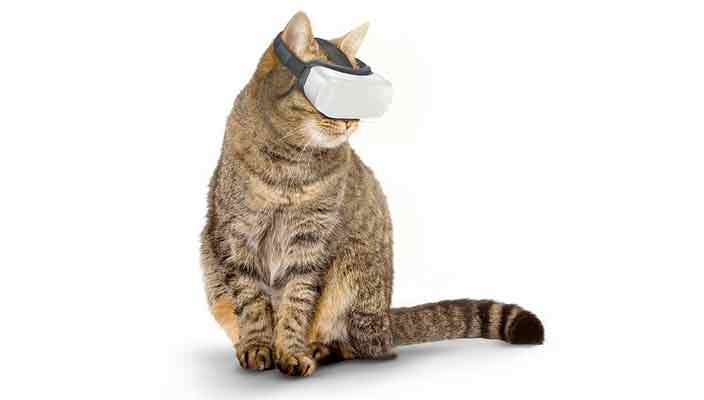 Создан шлем виртуальной реальности для кошек Cat VR | видео