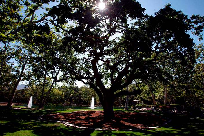 Сад с озером на ранчо Майкла Джексона