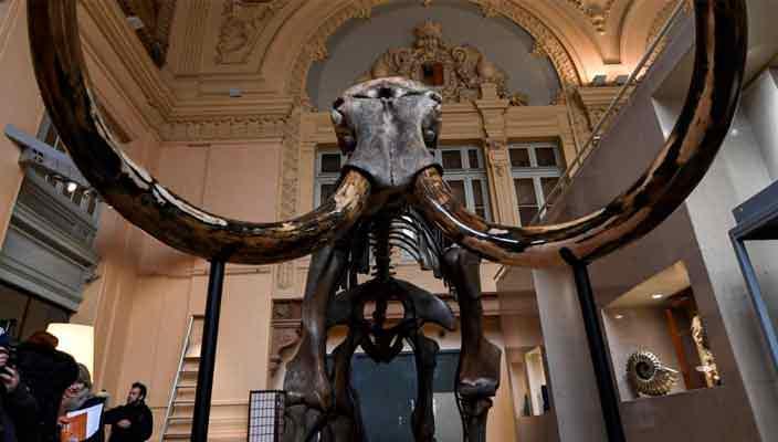 Скелет мамонта продан на аукционе за полмиллиона евро   фото