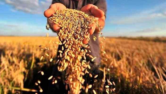 Магазин «Сучасна Дача» - лучшие семена и препараты в Украине