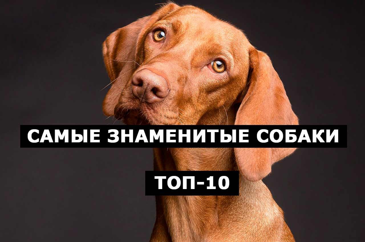 Самые знаменитые собаки. ТОП-10 в Инстагам