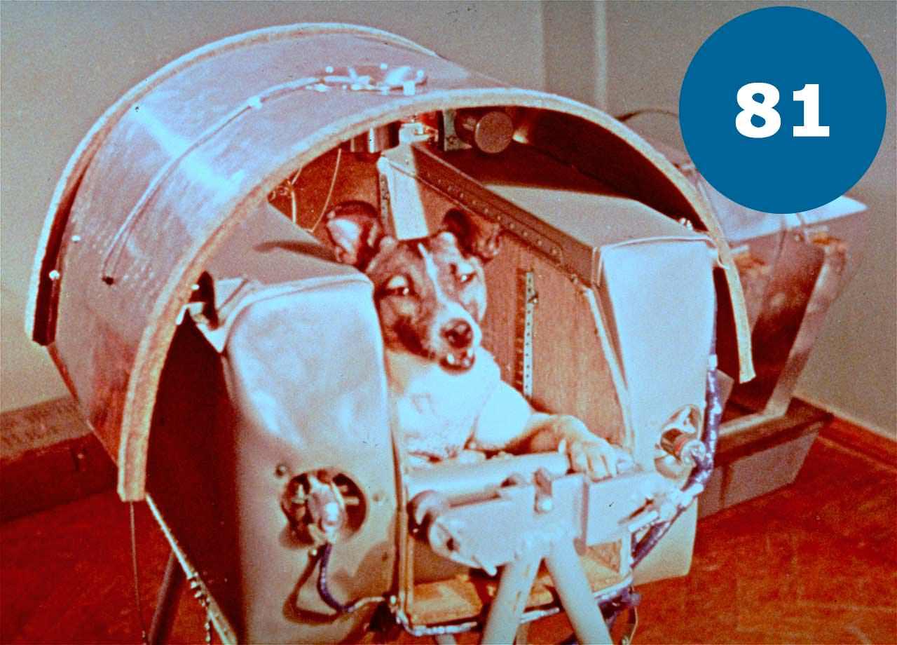 Перша собака в космосі