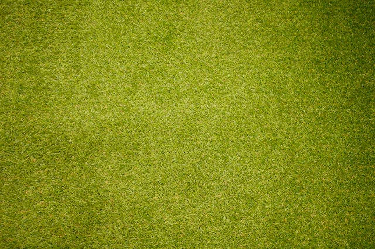 Грязеочищающие коврики – чистота и уют любого жилища, офиса!